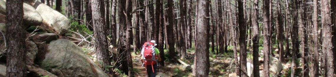 Sapatilhas Trekking